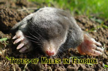 How To Make Homemade Pet Safe Rat Poison That Will Kill Rats